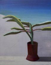 plant-on-grey-dunes-copy